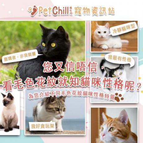 PetChill瘋狂喵-我愛好貓砂-最愛瘋狂寵物用品速遞-貓砂-貓糧-寵物資訊站-毛色花紋知性格 Wendy