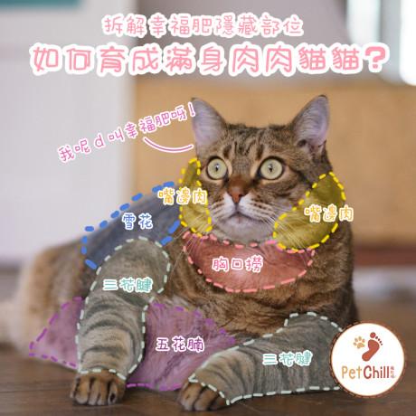 PetChill瘋狂喵-我愛好貓砂-最愛瘋狂寵物用品速遞-貓砂-貓糧-貓零食-拆解幸福肥隱藏部位-如何育成滿身肉肉貓貓 Wanda