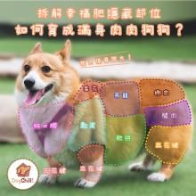 DogChill瘋狂犬-狗糧我至抵-最愛瘋狂寵物用品速遞-狗糧-狗尿墊-狗尿片-狗零食-如何育成滿身肉肉狗狗 Saman